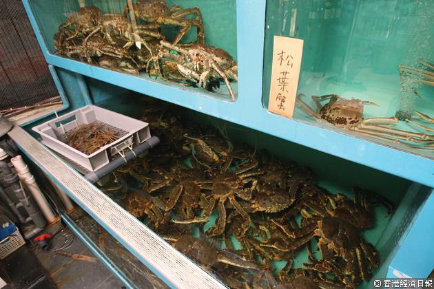 幾經調節,現時店內可同時養百隻日本活蟹。(曾有為攝)