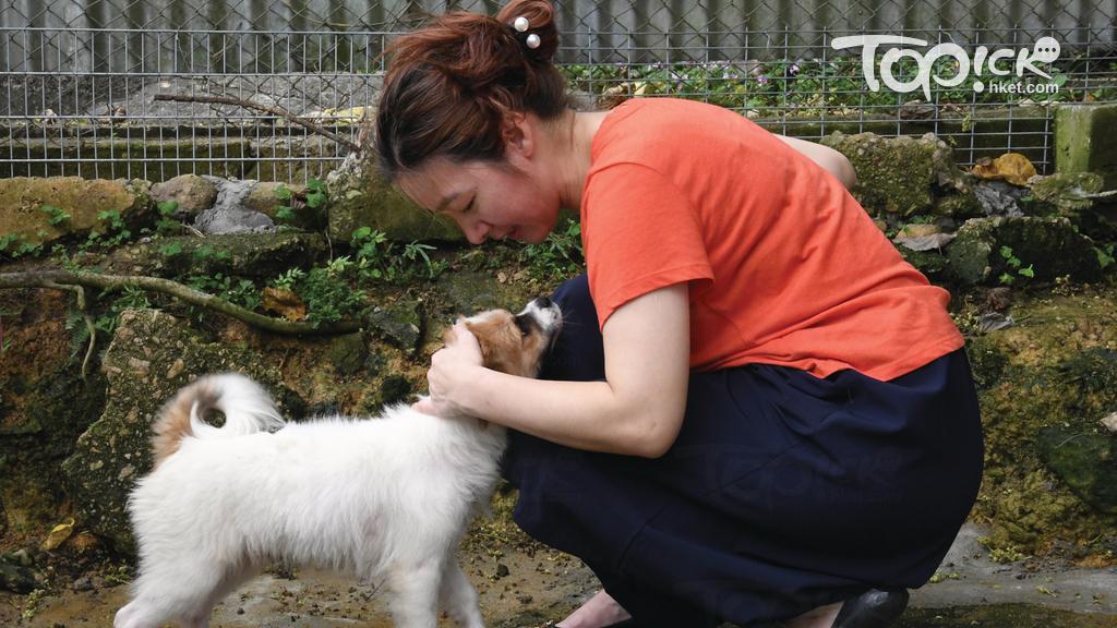 香港拯救貓狗協會創辦人謝曉梅亦指出,年初已收到10多隻繁殖場棄狗,修例實施至今再收20多隻,不少棄狗患皮膚病,亦有雙目失明、脫臼、甚至患有心絲蟲。(程志遠攝)