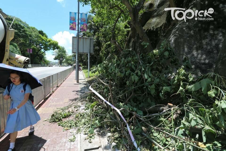 鷺鳥林被破壞。(資料圖片)