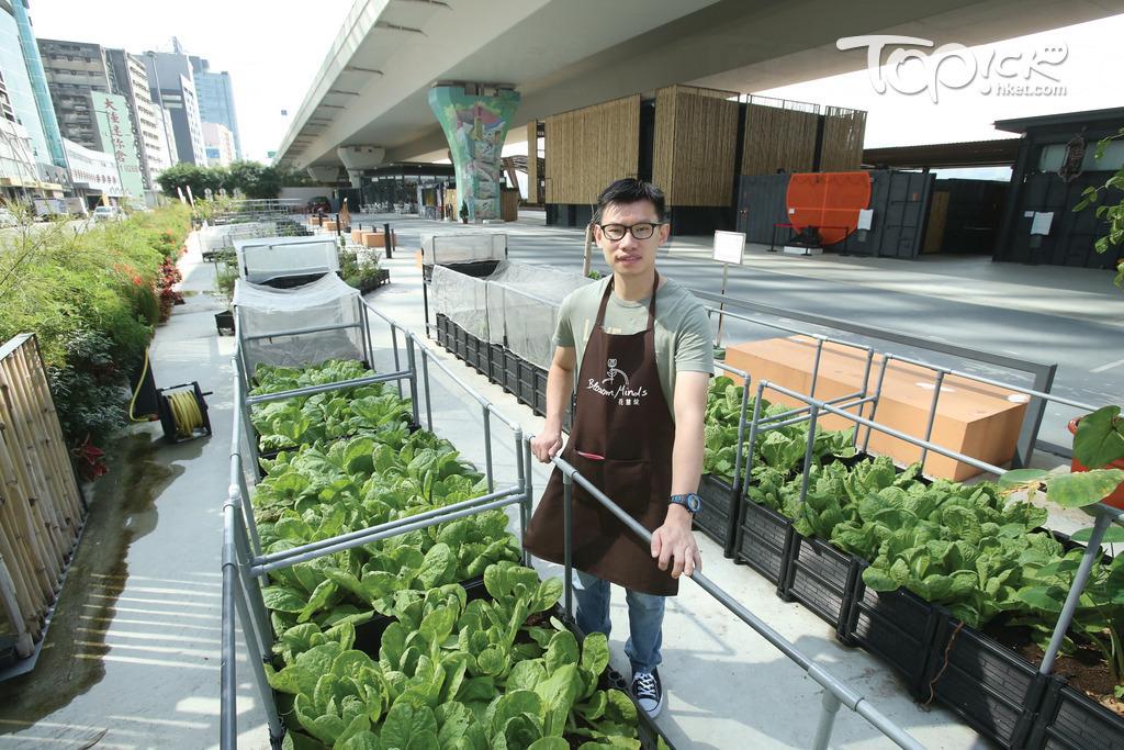 花店外設有一個大型園圃,種有多款瓜菜,由員工星仔負責打理。(湯炳強攝)