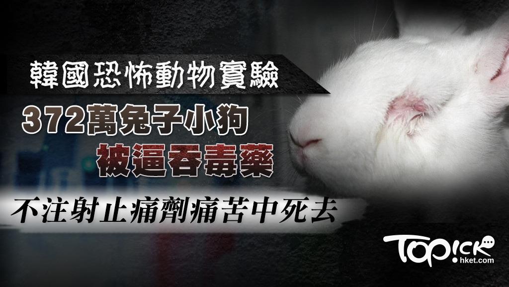 [img]https://topick.hket.com/res/v3/image/content/2395000/2395934/rabbit_thumb_20190709_ch_1024.jpg[/img]