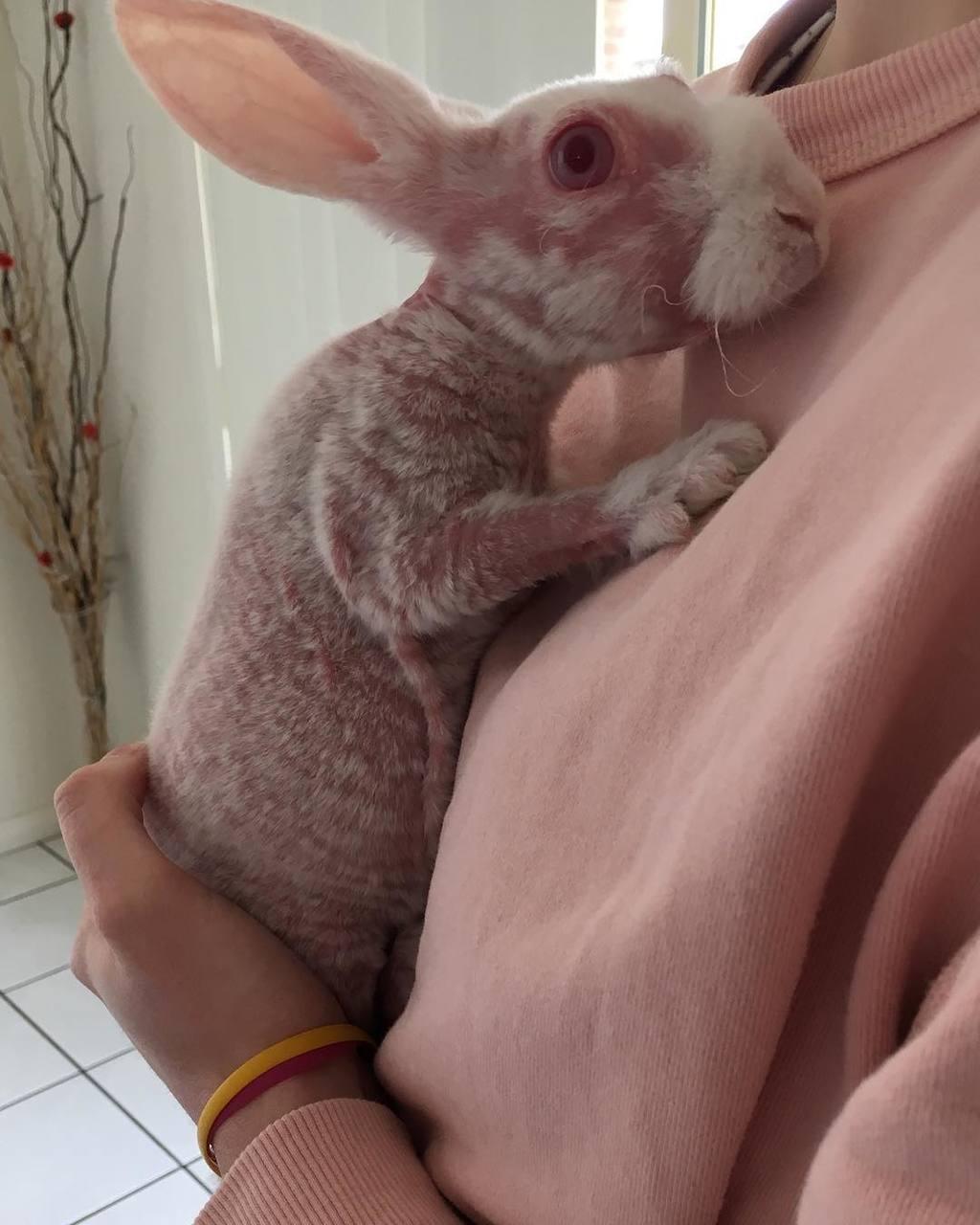 無毛兔曾經身上長出少量白毛毛。(圖片︰mrbigglesworthrabbit IG)