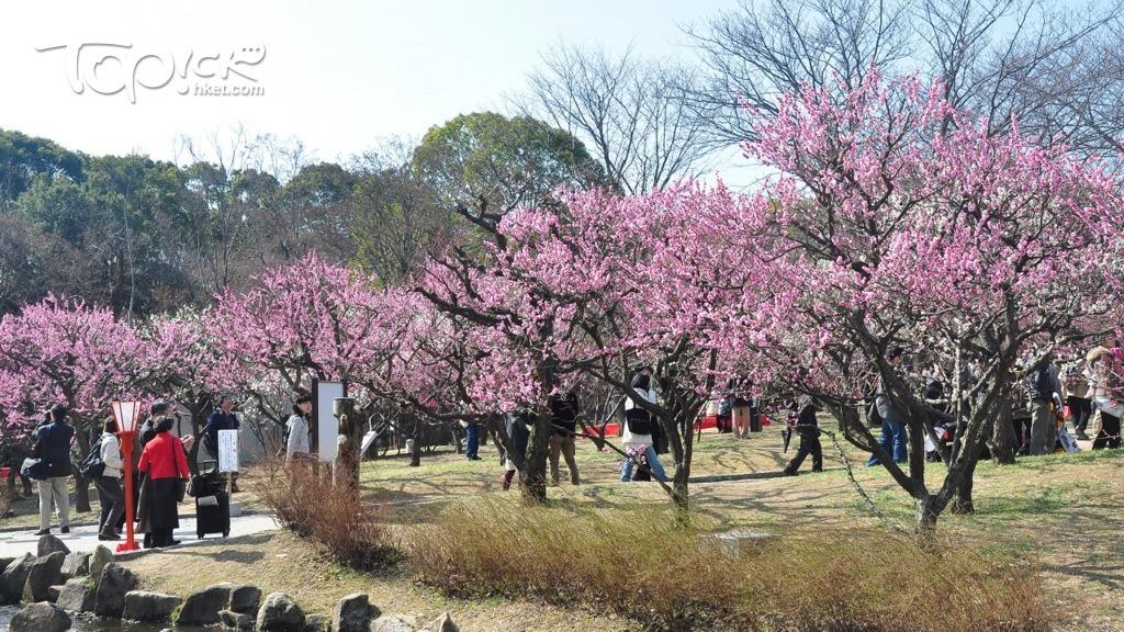 梅 大阪 城 公園
