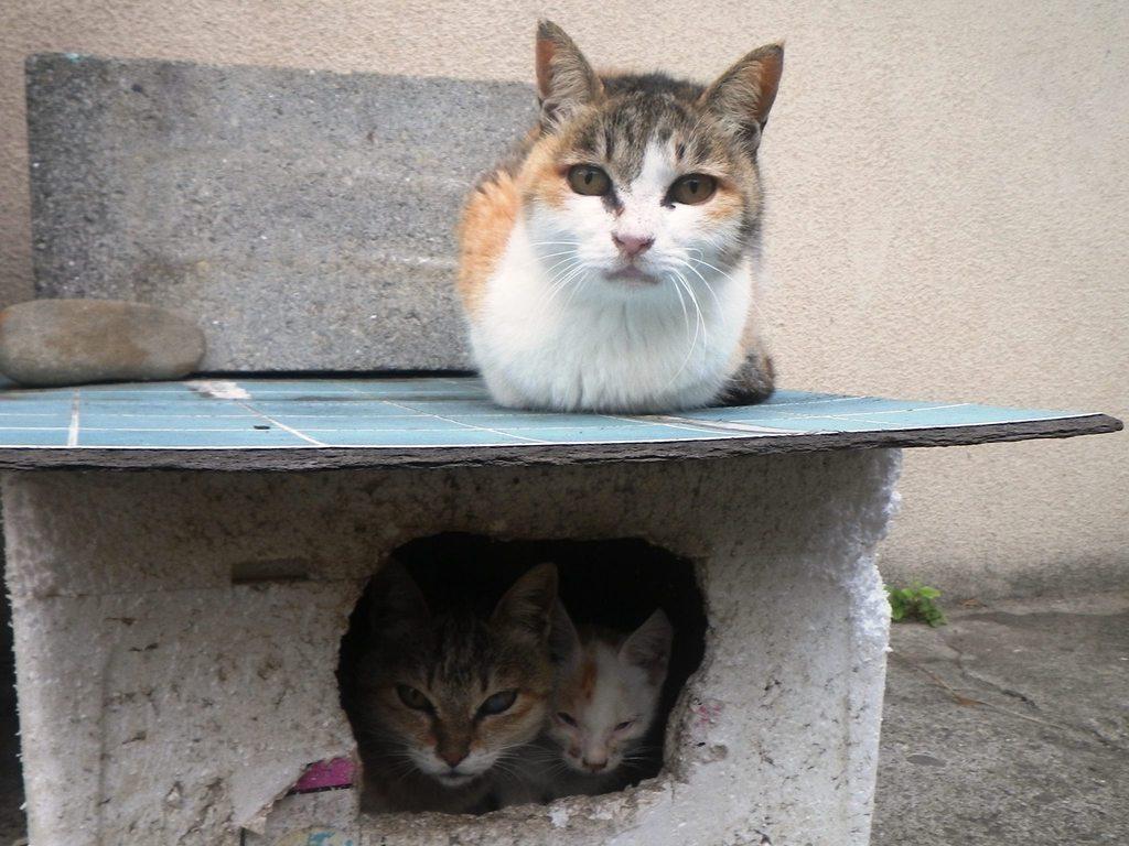 遠睇近睇貓咪都咁精靈可愛!(相片來源:Facebook) 其實,日本不止有一個貓島,新聞博客《Rocket News 24》報道,有網民列出其餘10個日本貓島,方便遊客及貓奴一拍貓咪的風采,來趟「尋貓蹤影」的特色之旅。 其中包括以下幾個較受遊客歡迎的貓島: 1. 宮城縣 田代島 日本貓聖地,田代島上的居民都很尊重貓咪,島上甚至有貓神社祀奉貓神,且禁止狗隻進入,可見貓咪的神聖地位。田代島位於石卷市,與仙台鄰近,一般會連著遊。 2.